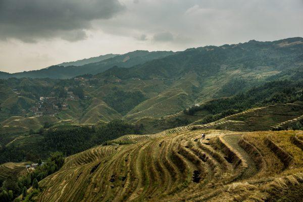 13 Marco Striuli - Passeggiata nelle risaie