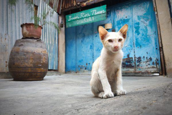 14 Stefano Vio - Il gatto in posa