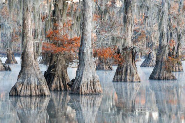 5 Roberto Bartoloni - Big cypress swamp