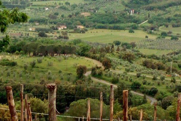 8 Silvia Sartori - Andar per campi in Toscana