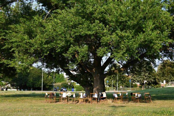 04 Ermenegildo Vio - L'albero e il Covid-19