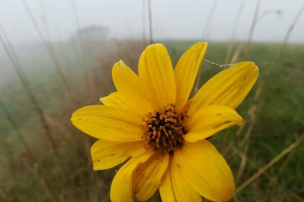05 Benedetto Gobbo - Un fiore nella nebbia